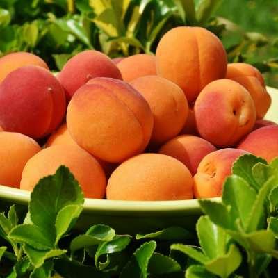 10 důvodů proč jíst meruňky